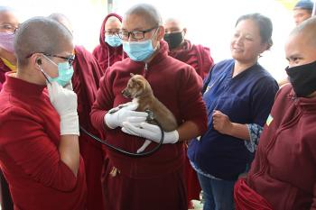 Training  Nuns as Animal First-aiders